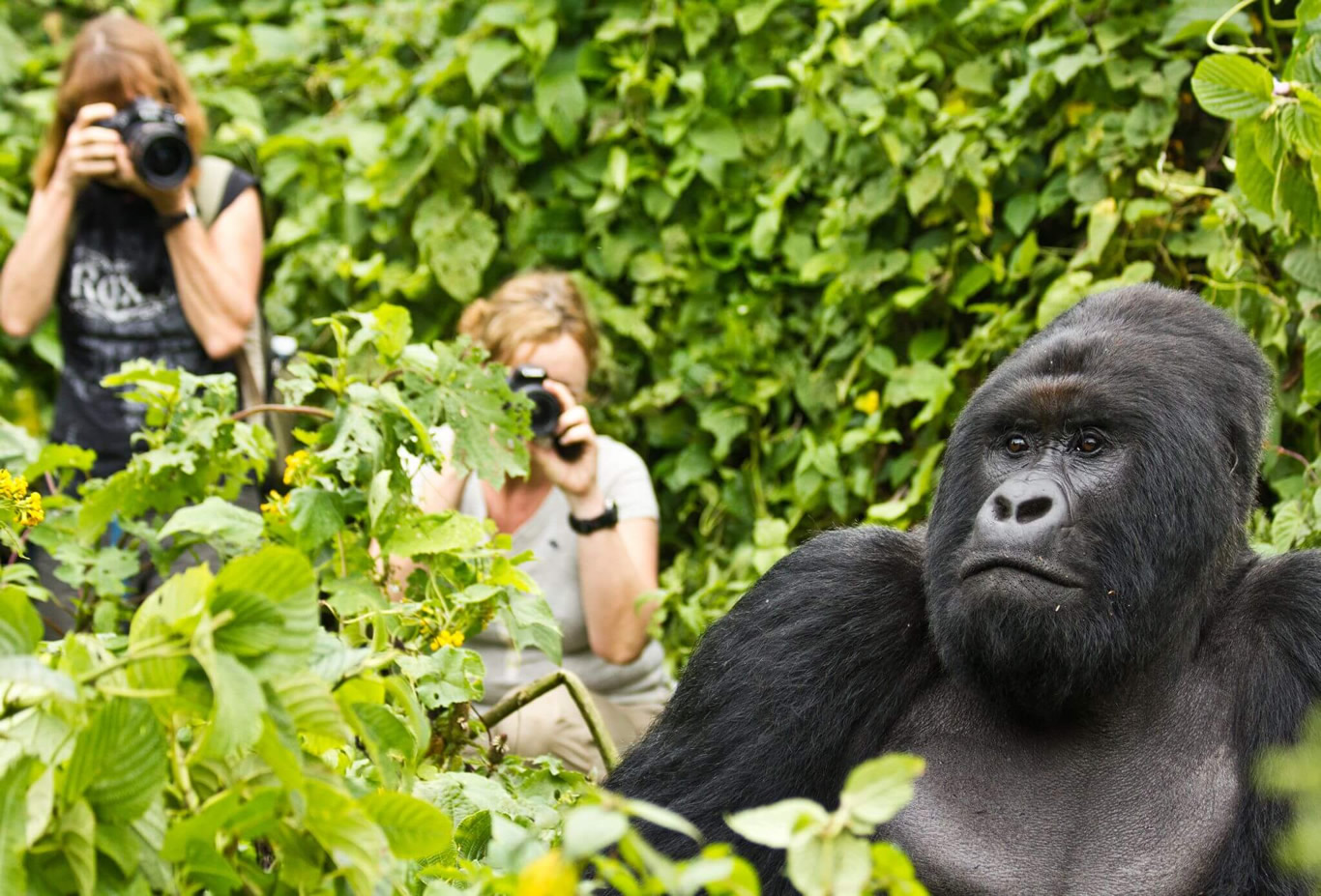 Volcanoes and Gorilla Safari in Kisoro Uganda