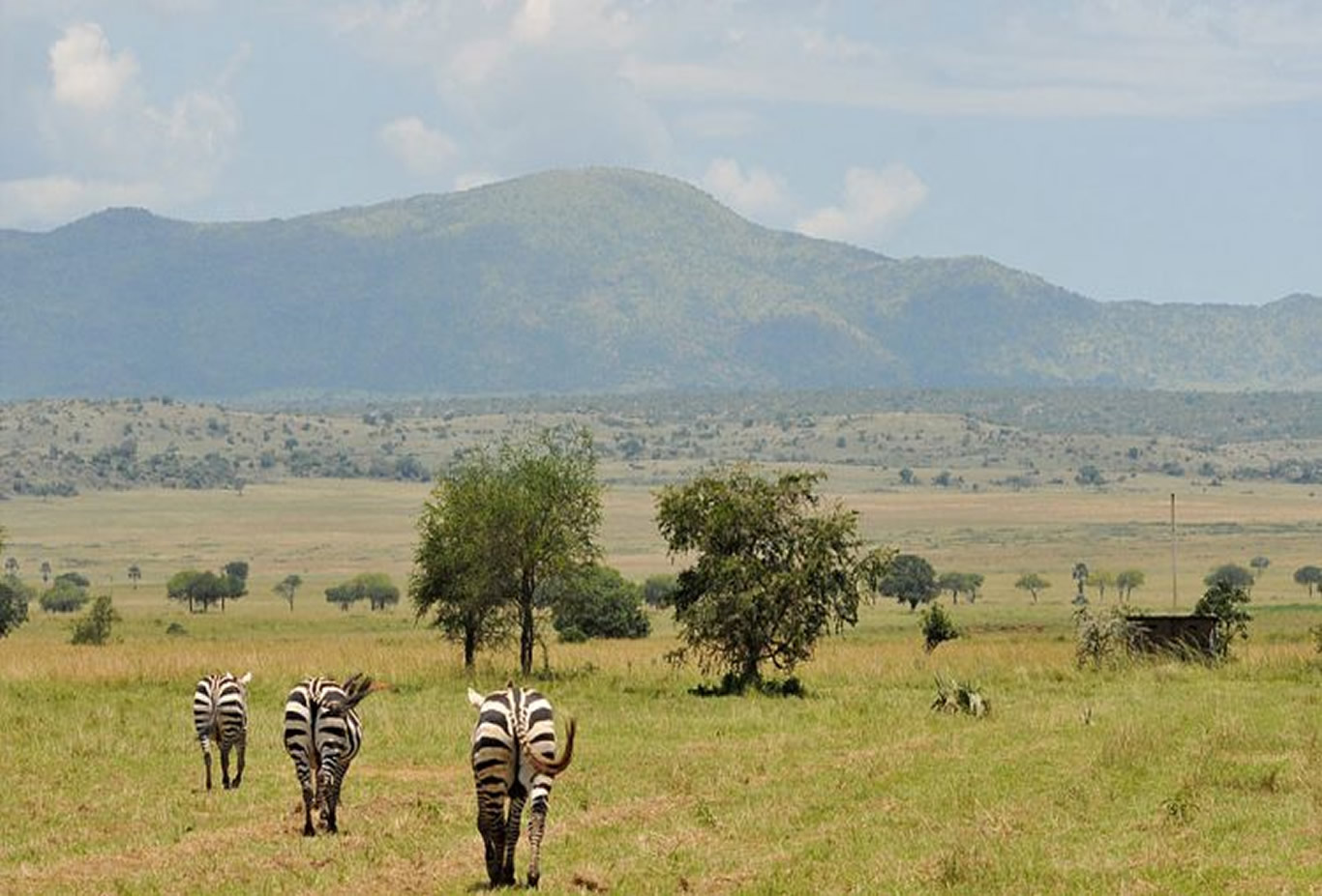 African Wilderness Safari in Kidepo Valley National Park Uganda