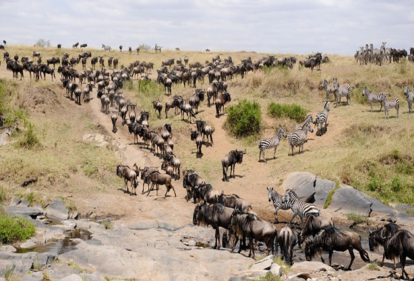 Great Migration Safari with Camping in Masai Mara, Kenya